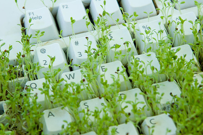 Growing sprouts in a keyboard